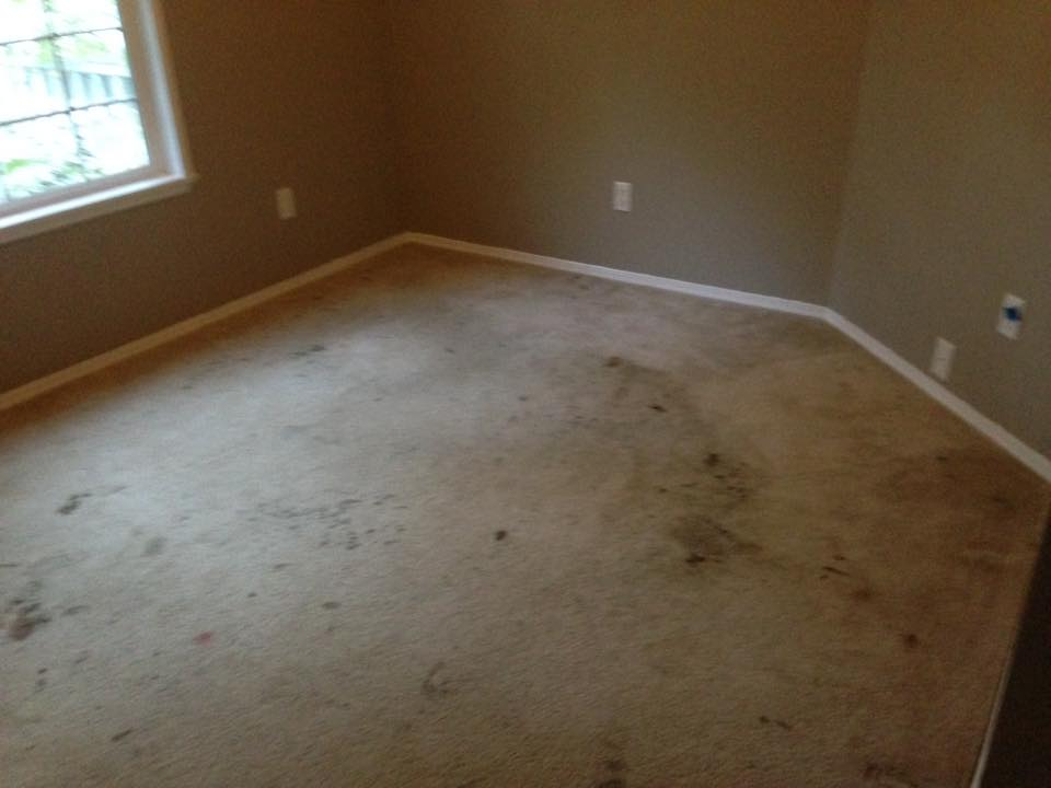 Stained and dirty carpet Before & after photos